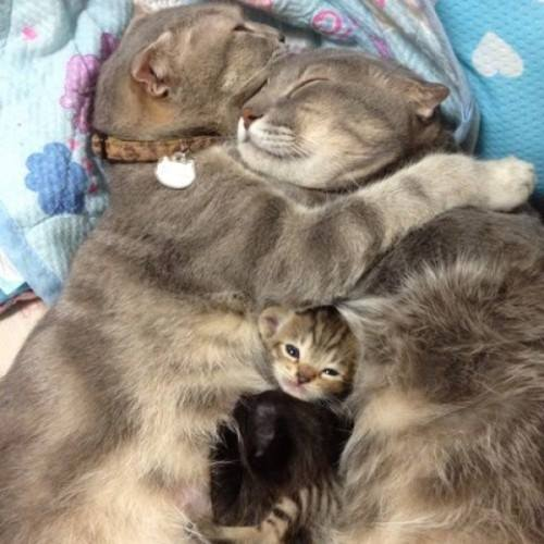 Les chats - Page 37 1511647_10201549163237344_875947852_n