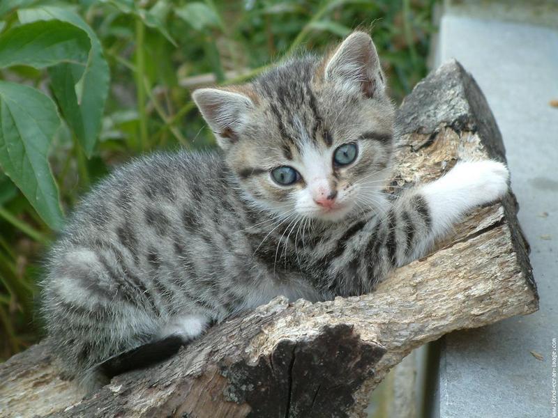 prénoms de chats !