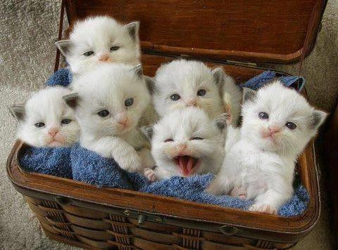 """Résultat de recherche d'images pour """"image de chat animé"""""""