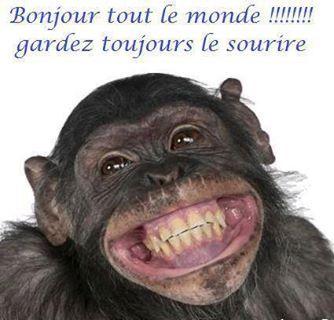 Singe - Image sourire gratuit ...