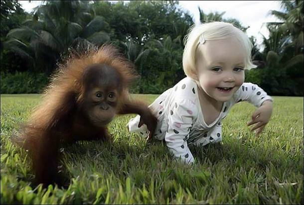 Bebe orang outan et enfant