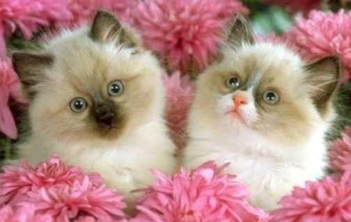 Ma passion des chats page 10 - Image de chat mignon ...