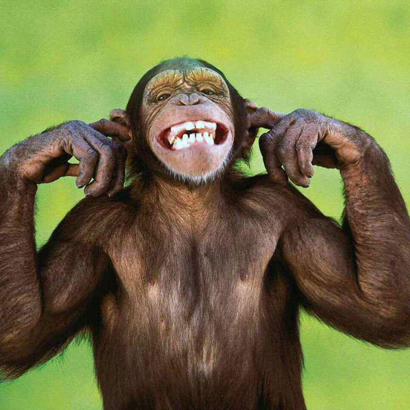 monkey funny video singe drole compilation funniest pet debiloguys ...