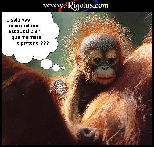 Humour page 4 - Petit singe rigolo ...